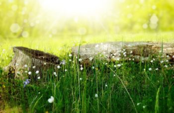 Grass field with fallen tree and flowers